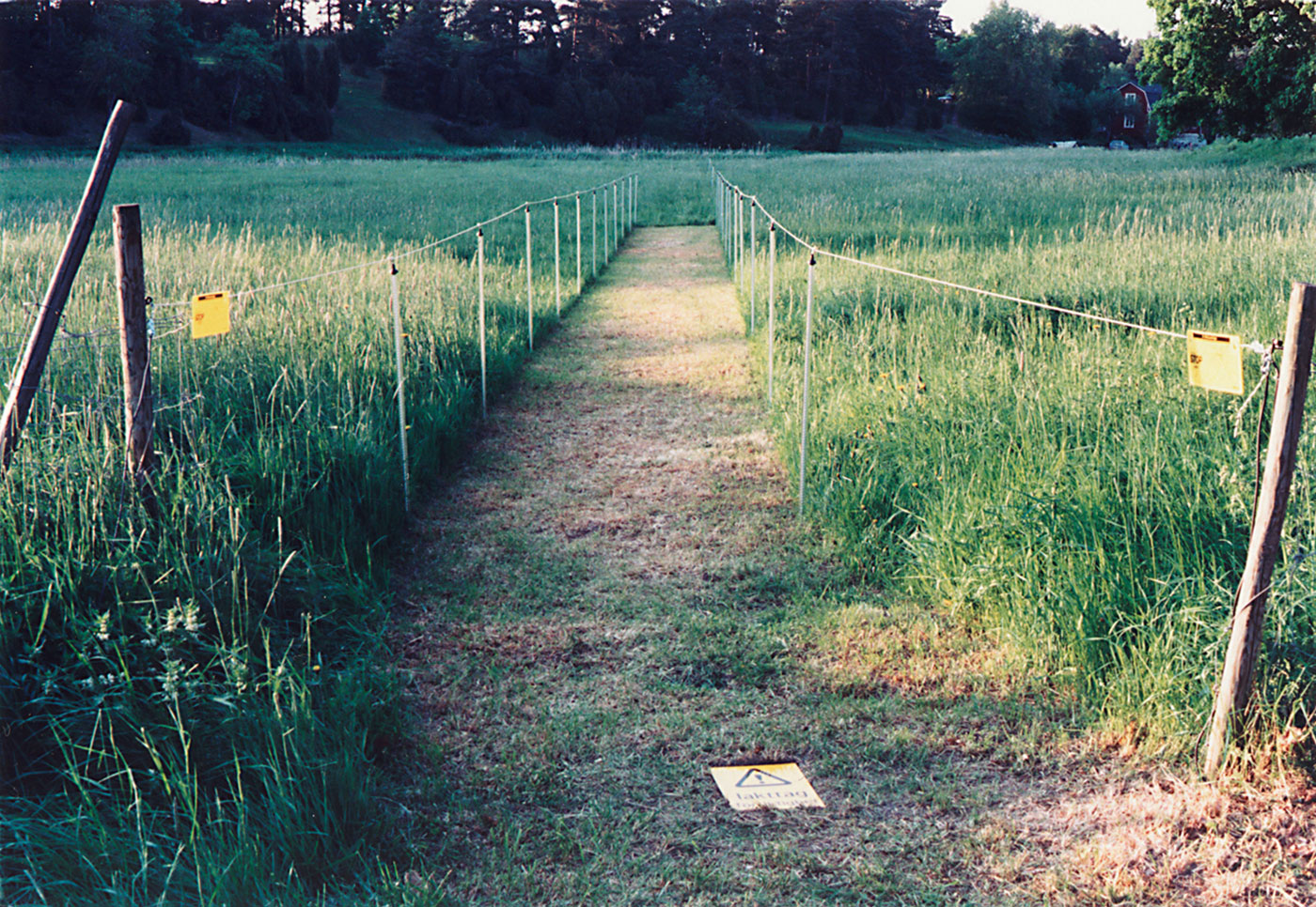 A path is leading out to a field, well-cut, easy to walk.