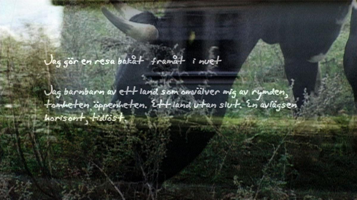 I Färjestadens släktforskningsdator fann jag Farmor. Jag såg på den sirligt noggranna texten som skrevs in i Gräsgårds födelsebok 1883.
